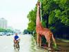 江城路边现长颈鹿