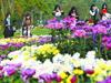 植物园珍品菊展