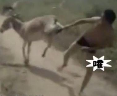 奇葩男子跟驴互踢