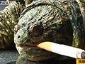 宠物龟抽烟成瘾