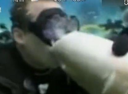 导游亲吻鲨鱼被咬