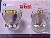 化学物致死鱼复生