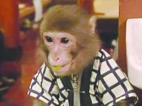 猴子酒馆当服务员
