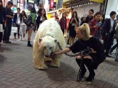 东京美女闹市遛白熊 路人惊呆齐拍照