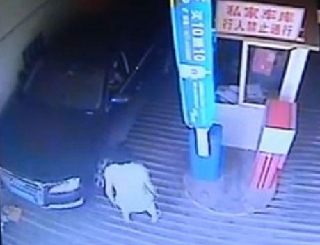 女司机夹死男婴