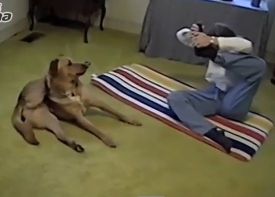 大狗学主人做瑜珈