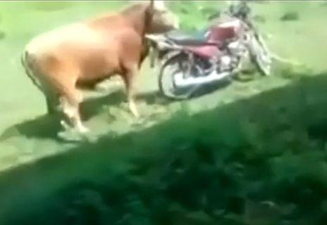 公牛爆笑性侵机车