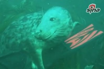少年被海豹求抱抱