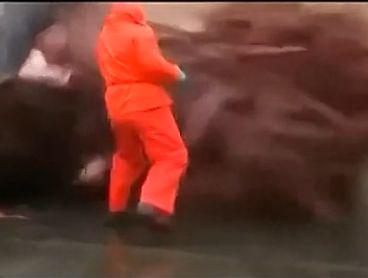 实拍鲸鱼海滩爆炸 血肉横飞如泄洪