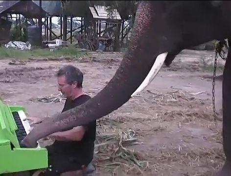 钢琴家与大象合奏