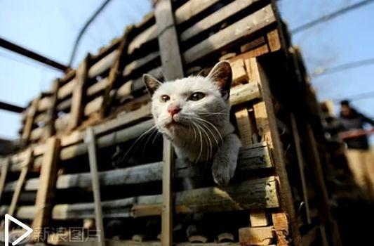 实拍武汉志愿者拦停贩猫车 解救2800只猫