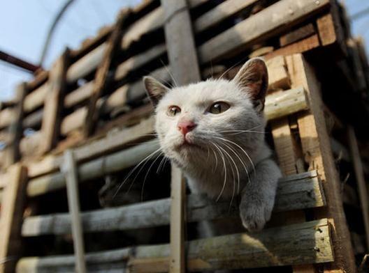 实拍武汉志愿者追拦贩猫车 解救2800只猫