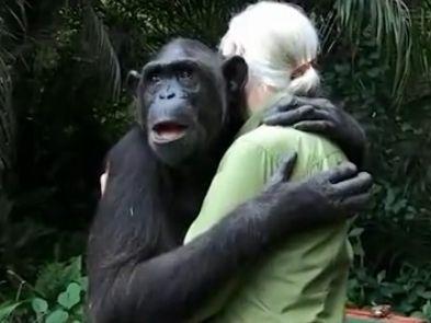 猩猩获救拥抱恩人