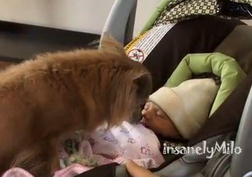 狗狗初见新生儿 兴奋叼自己玩具给宝宝