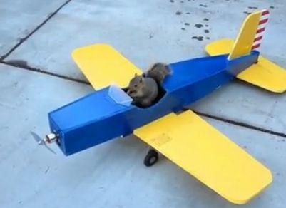 松鼠偷开模型飞机