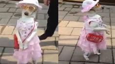 实拍狗狗穿洋装戴墨镜 逛街也有明星范