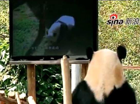 大熊看电视解闷